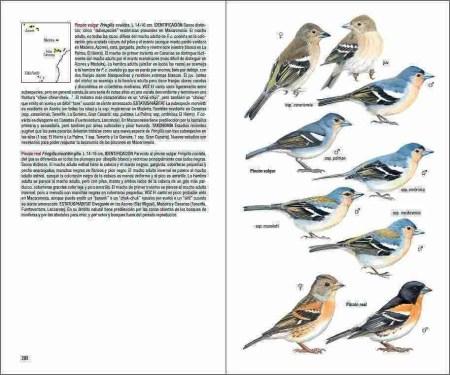 Aves de Macaronesia sample page