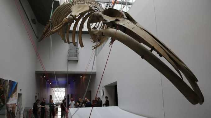 Le Musée des Confluences envisage une réouverture le 2 juin