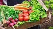 fermeture des marché la Métropole veut permettre aux producteurs d'écouler leurs produits frais