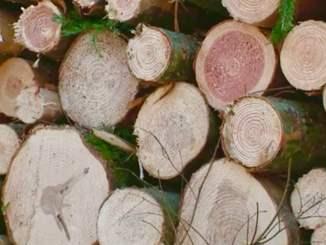 La filière bois profite de l'été pour faire découvrir ses métiers