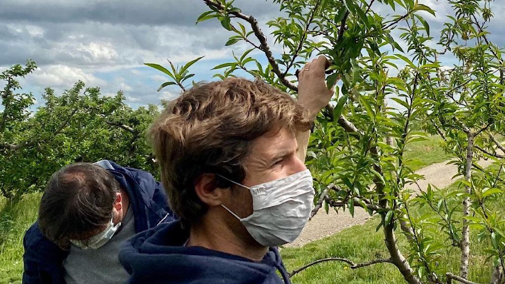 La Métropole de Lyon vient en aide aux arboriculteurs touchés par le gel