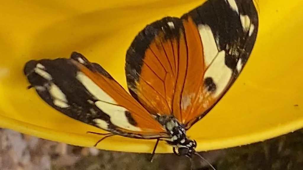 Des papillons au parc des Oiseaux - Lyon Demain