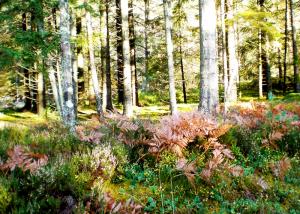 lysefjorden_skog