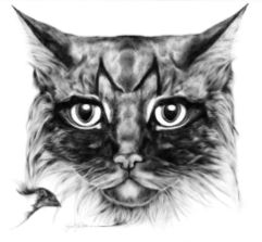 """""""M le chat"""""""