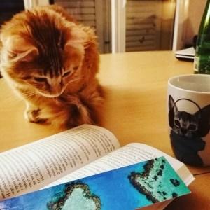 Rooky le chat lecteur
