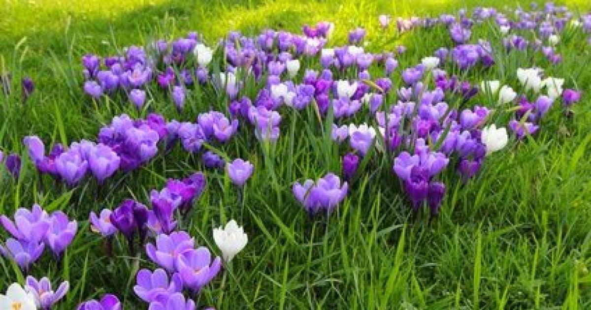 Une jachre fleurie dans un jardin