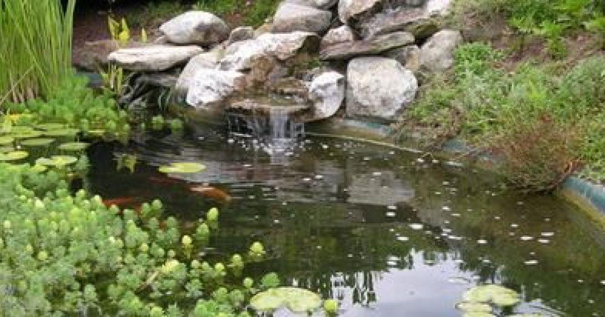 Un Bassin Dornement Pour Votre Jardin Relaxant