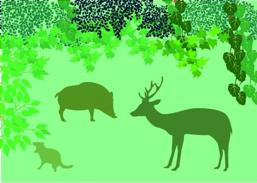 10月18日 野生動物(ニホンジカ・イノシシ・ハクビシン)の行動特性と、具体的捕獲方法についての講座