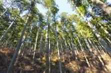 よく手入れされた森には、太陽の光が木の足元までさんさんと降り注ぐ。