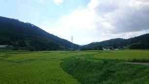 稻田與河川的田園風景