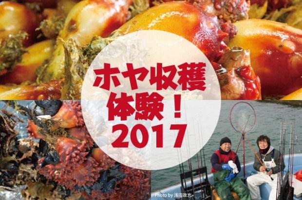 「ホヤ収穫体験!2017」 開催!!