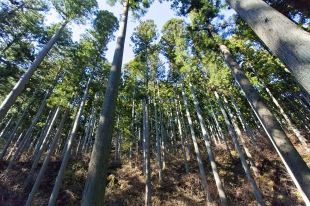 FSCの森調査隊・参加者募集(FSC森林モニタリング植生調査兼講習会)