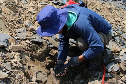 化石発掘体験