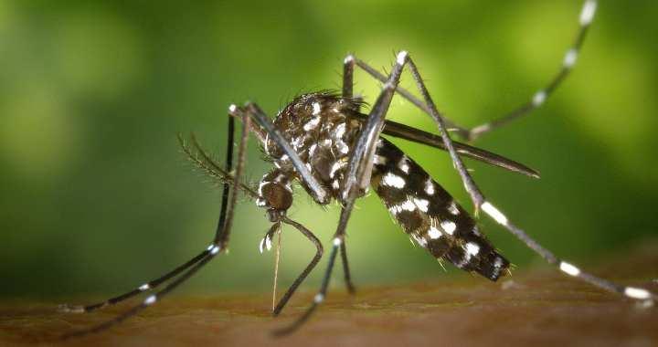 Heb ik knokkelkoorts ? | Het dengue virus onder de loep