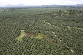 palmolie en bauxiet in maleisie