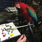 Photo of Apollo, Green-Winged Macaw, Creating Painting 2016-02