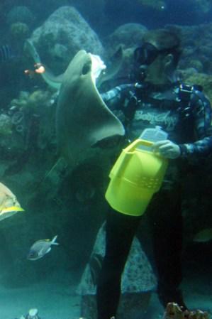Plongeur à l'aquarium de New England