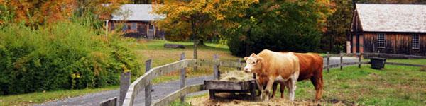 Massachusetts - Mohawk Trail