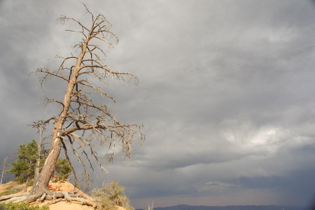 Bryce canyon utah 7
