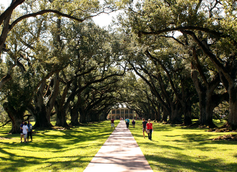 En Louisiane La Plantation De Oak Alley Et Promenade