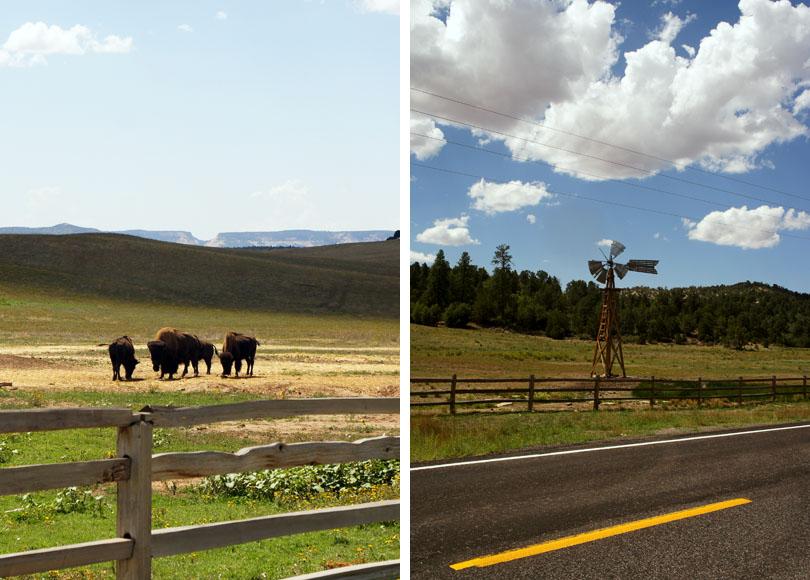 Bisons et moulin, Utah