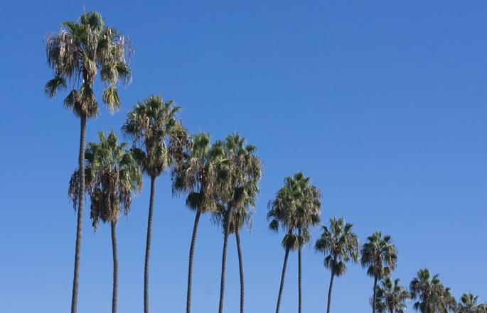Les palmiers - La Jolla, California