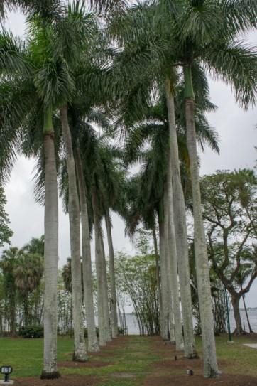 Allée de palmiers - Fort Myers, Floride