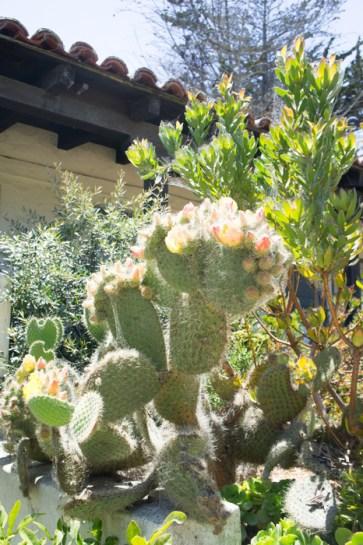 Cactus à Monterey Californie