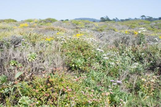 17 mile drive Monterey Carmel Californie les plantes