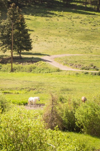 VAlles Caldera Route 4 Nouveau Mexique chevaux dans la prairie