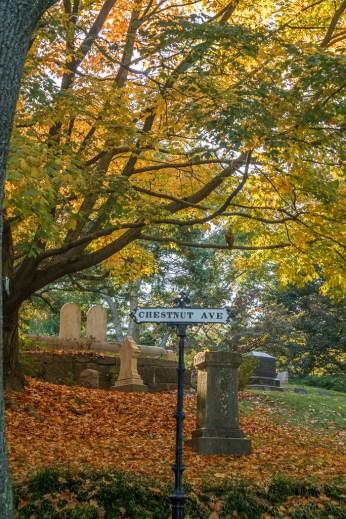 Mount Auburn Chestnut Av