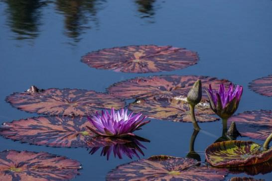 Botanical Garden - Denver Colorado-31
