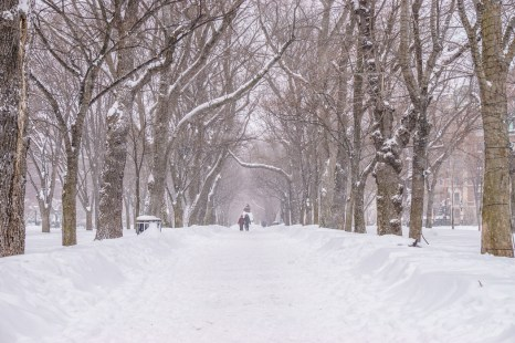 boston blizzard Commonwealth Avenue