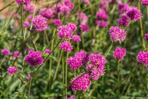Denver Colorado- jardin botanique