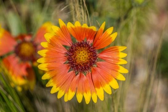 Denver Colorado- jardin botanique 1