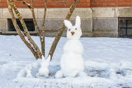 Harvard Art Museum - Harvard Yard - lapins bonhomme de neige