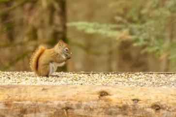 parc omega - mini écureuil | www.maathiildee.com