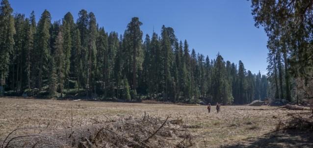 sequoia national park californie-2