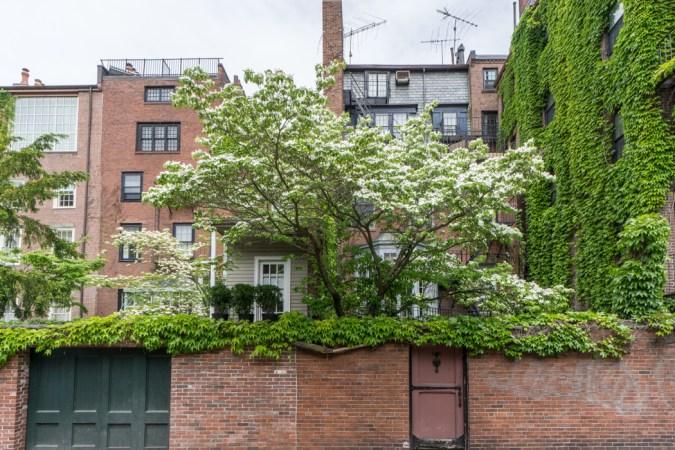 Jardins secrets Beacon Hill Boston-33