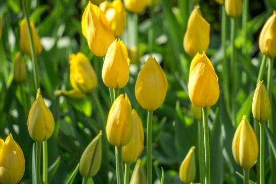 Printemps Boston floraison-13
