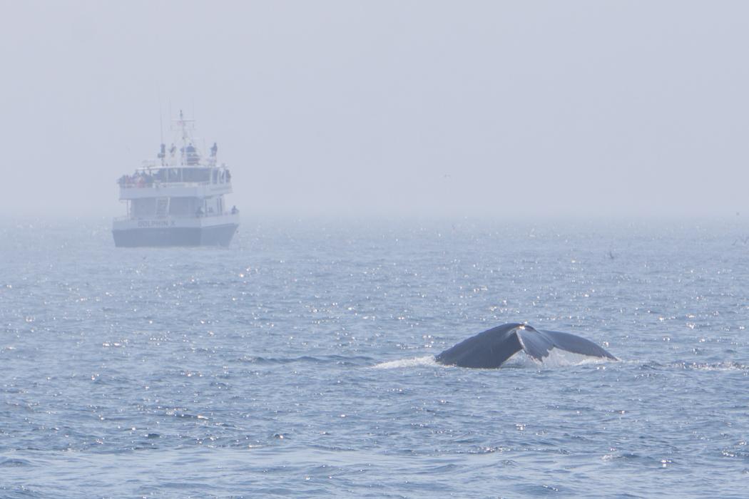 Baleines boston-3