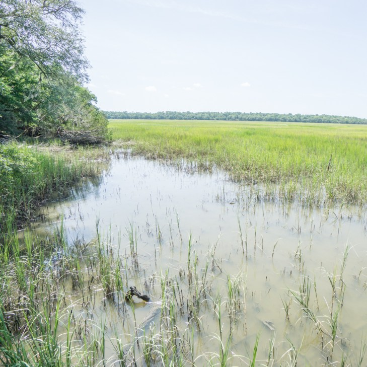 Le parc historique de Wormsloe Savannah Georgie-6