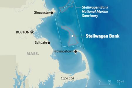 la réserve de baleines au large de Boston