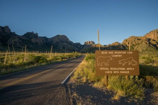 Big Bend Texas mountain lion and bear sign