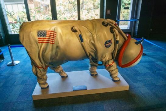 Visiter Chicago - vache