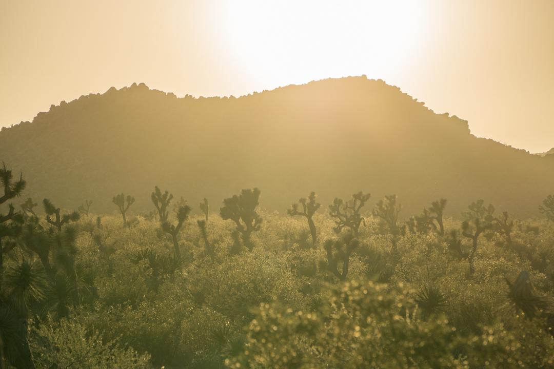Sunset Joshua Tree Park California-1