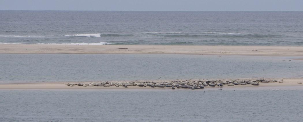 Cap Cod Massachusetts Nouvelle Angleterre-24