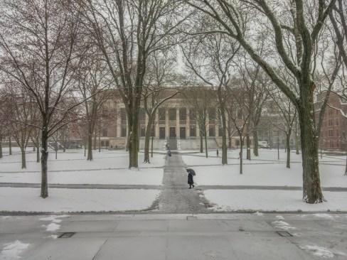 Harvard sous la neige