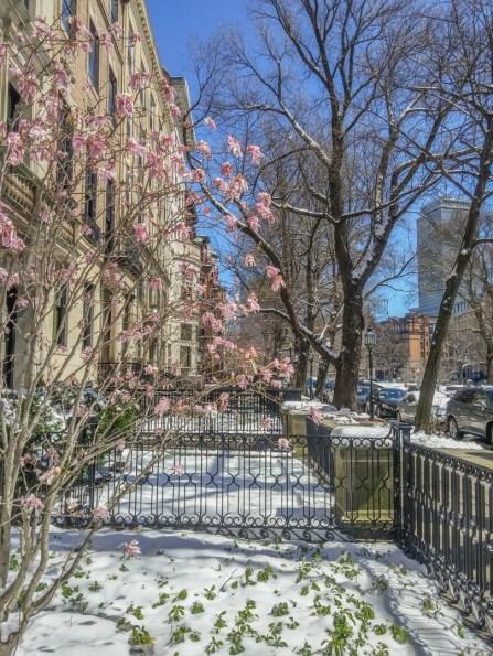 Vivre a Boston - neige au printemps