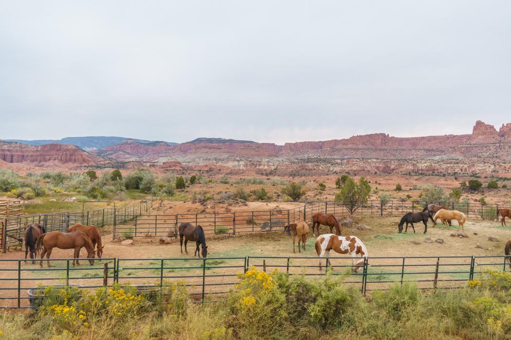 Capitol Reef Utah chevaux-1